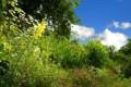 Naravni vrt