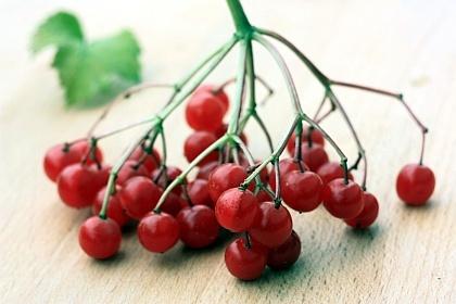Plodovi borgovite