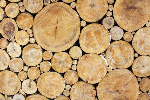 Odkup lesa, september 2014