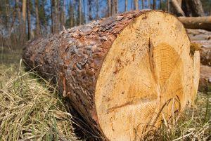 Vrednost odkupa okroglega lesa v aprilu 2017 za 5 % nižja kot v aprilu 2016