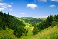Gozd je vir stalnega dohodka | Vodic - Gozdovi Slovenije